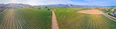 Aerial Drone Photography FAA Part 107 Commercial Remote Pilot - Trione Vineyards and Winery Sonoma County California - Niall David Photography-0227