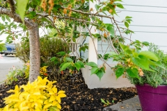 HGTV Home Garden Television Curb Appeal John Gidding San Francisco Bay Area Architecture Interior Design Niall David Photography-1552