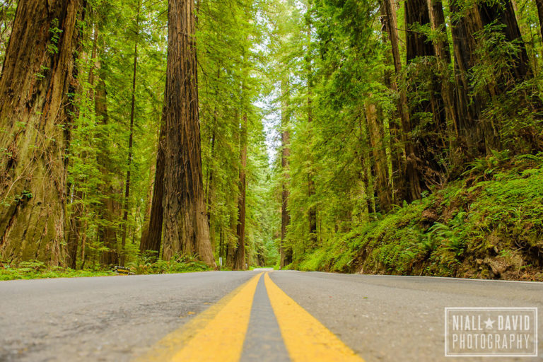 Niall David Photography - Avenue of the Giants Redwoods California-0930